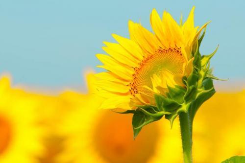 Цветы 5363