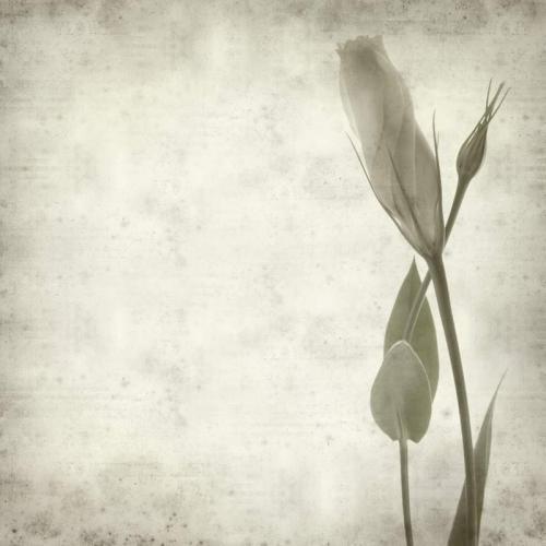 Цветы 5365