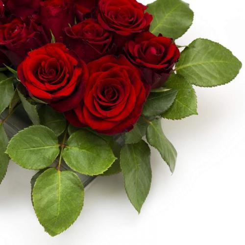 Цветы 5366