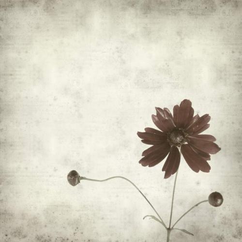 Цветы 5367
