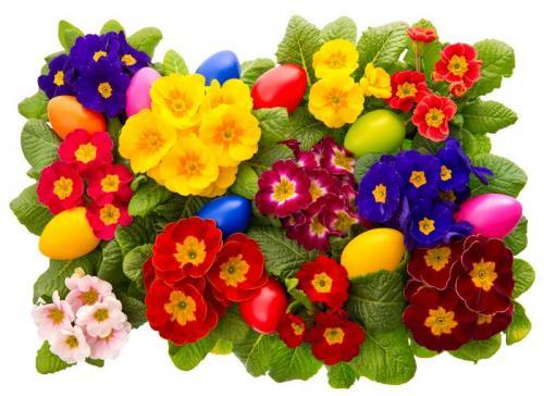 Цветы 5369