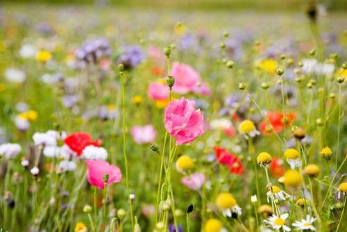 Цветы 5371