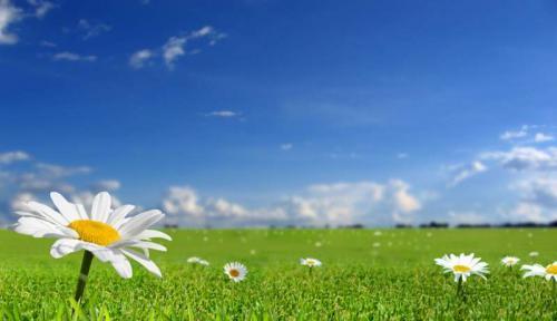 Цветы 5375