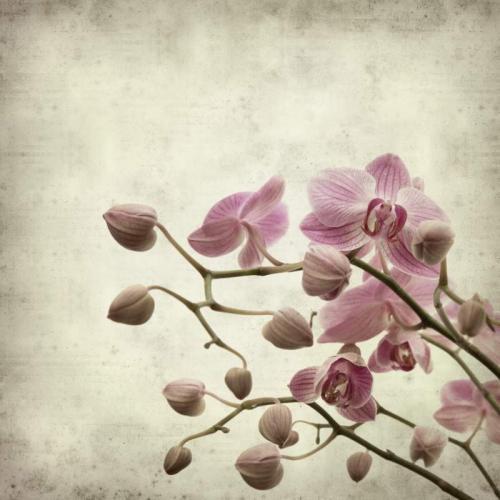 Цветы 5376