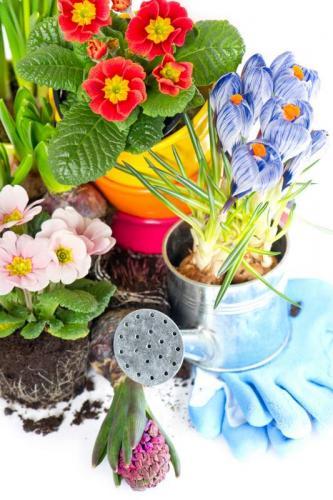 Цветы 5377