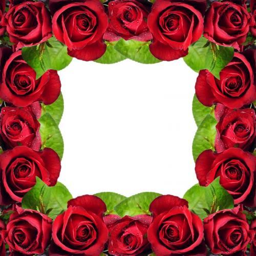 Цветы 5382