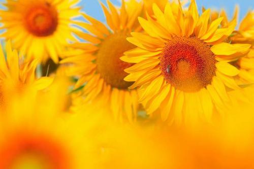 Цветы 5385