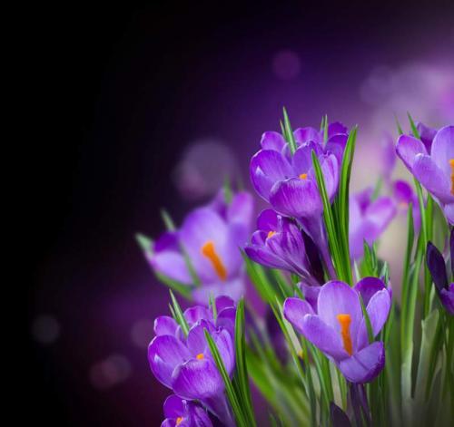 Цветы 5392