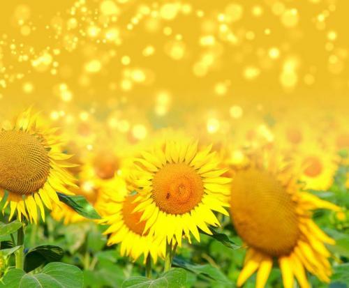 Цветы 5395