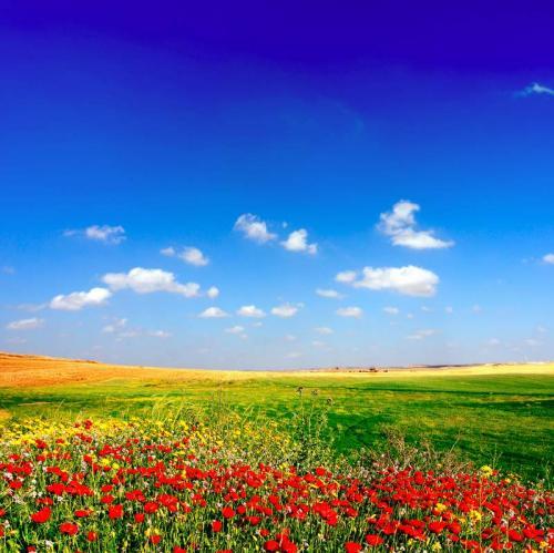 Цветы 5397