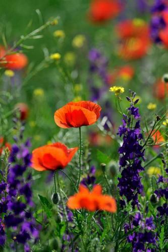 Цветы 5399