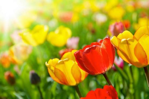 Цветы 5407