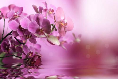 Цветы 7887