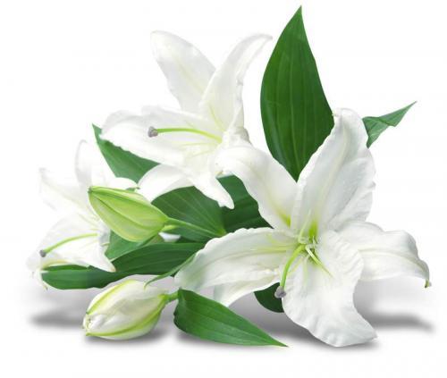 Цветы 7911