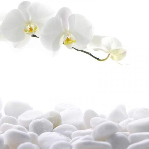 Цветы 7939