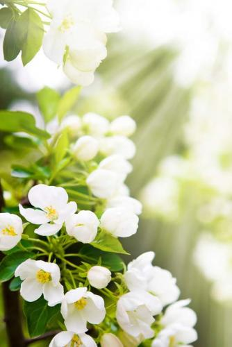 Цветы 8013