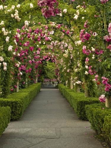 Сады 1221