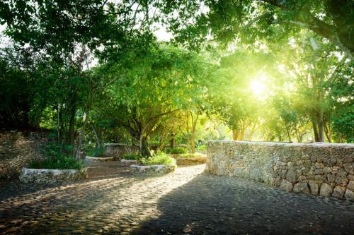 Сады 1223