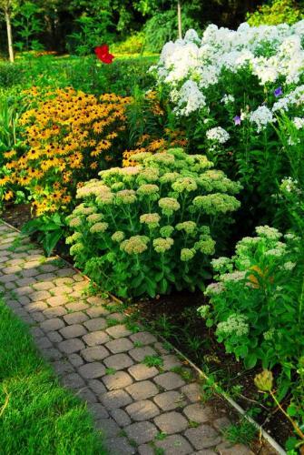 Сады 5782