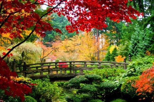Сады 5786