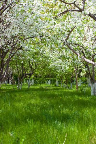 сады 755