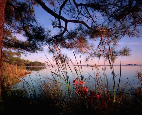 Природа 20047