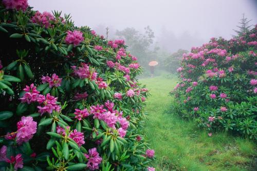 Природа 20049