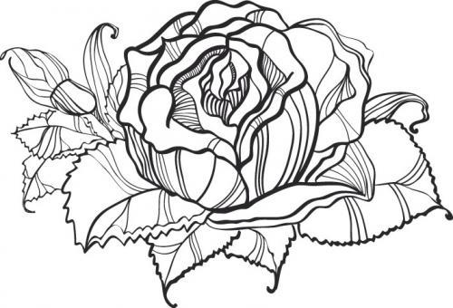 Рисунки карандашом 9218