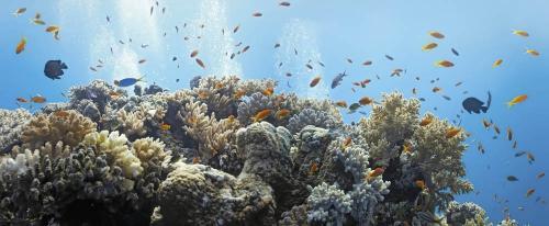 Подводный мир 1499