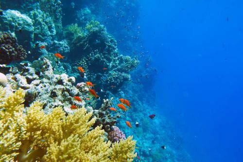 Подводный мир 1506