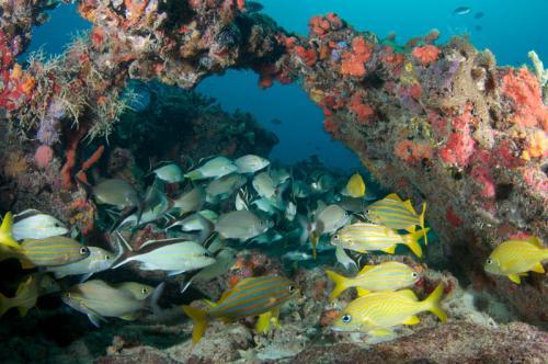 Подводный мир 1508