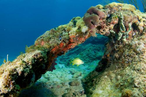 Подводный мир 1510