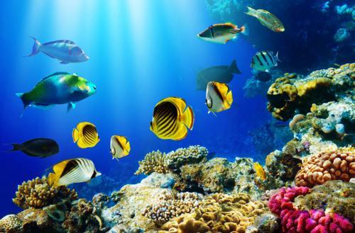 Подводный мир 1514