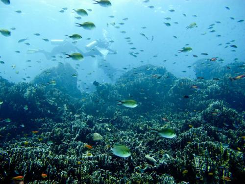 Подводный мир 1517