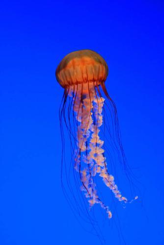 Подводный мир 3138