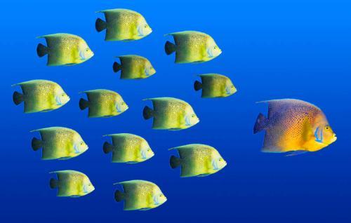 Подводный мир 3142