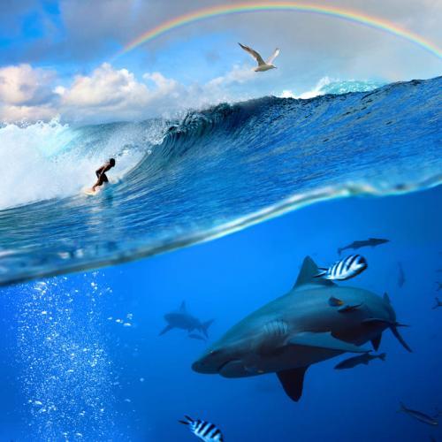 Подводный мир 3144