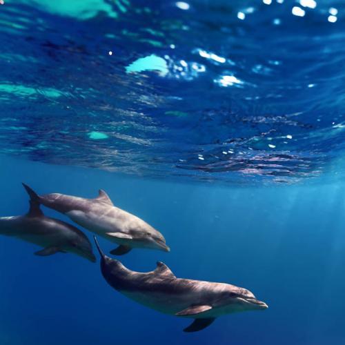 Подводный мир 3146