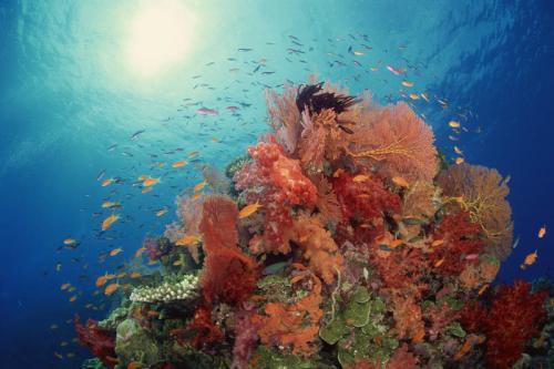 Подводный мир 3469