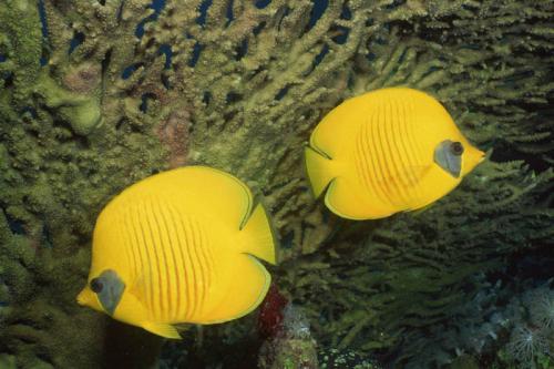 Подводный мир 3471
