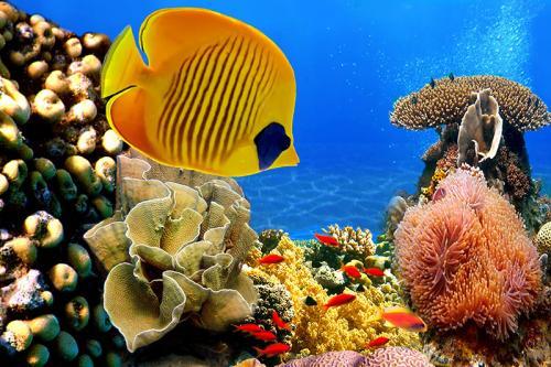 Подводный мир 3620