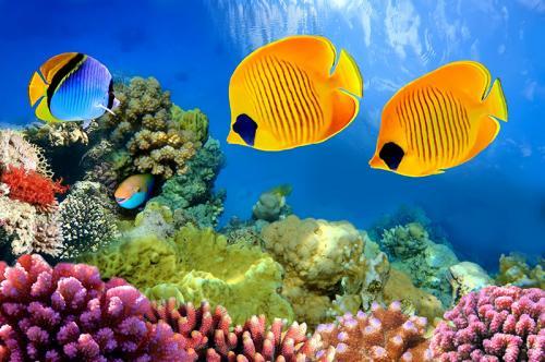 Подводный мир 3621