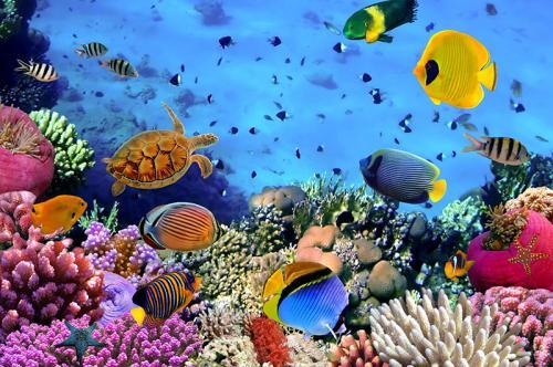 Подводный мир 4362