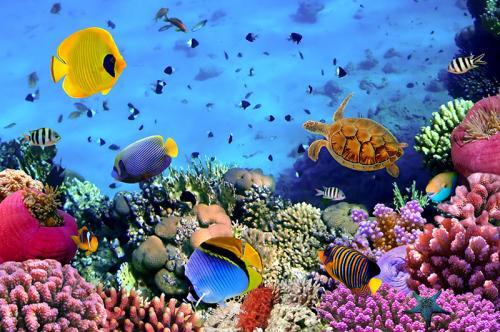 Подводный мир 4363