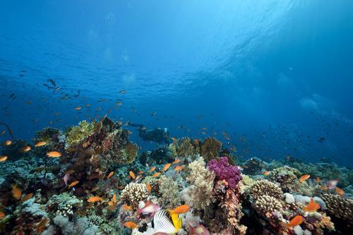 Подводный мир 4418