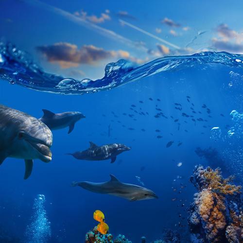 Подводный мир 4423