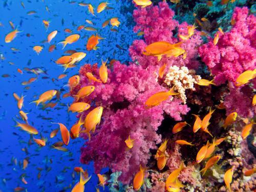 Подводный мир 48