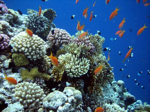 Подводный мир 49