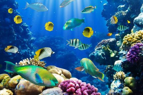 Подводный мир 6254