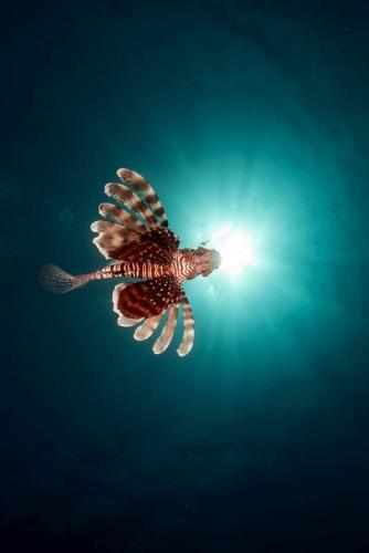 Подводный мир 6255